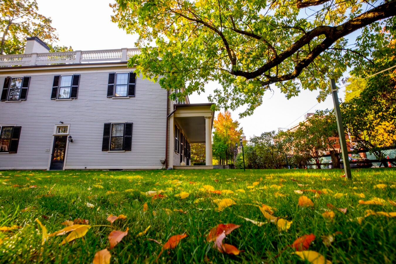 Autumn leaves on a green lawn with a white house in the background