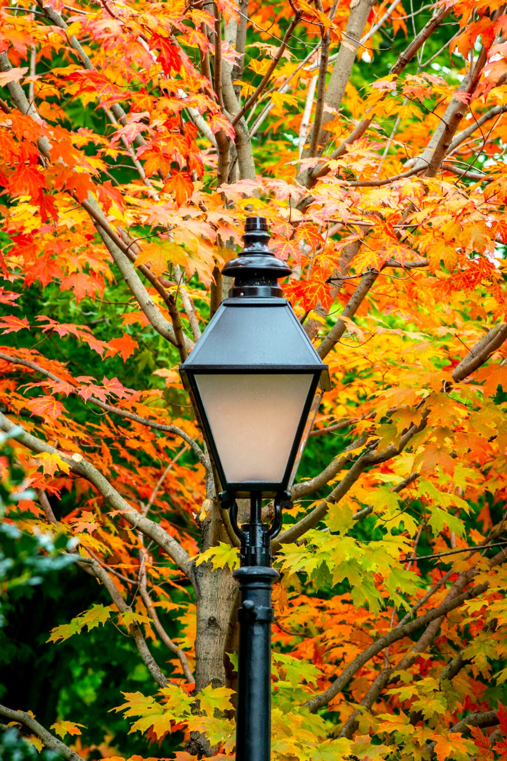 A black lamppost in front of a red and orange leafed tree