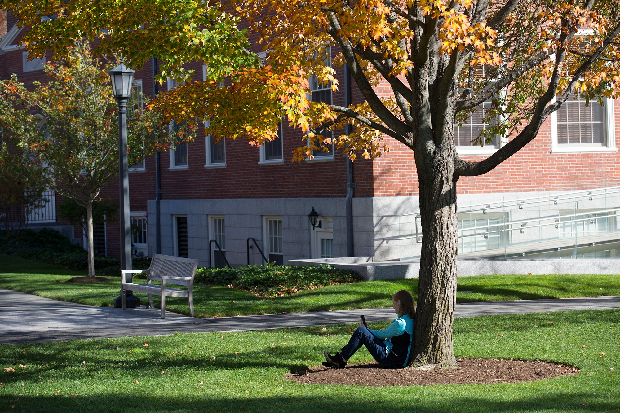 A woman sitting under a tree with autumn leaves