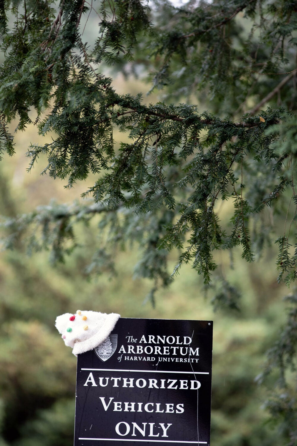 """A child's hat on a sign that says """"Arnold Arboretum"""""""