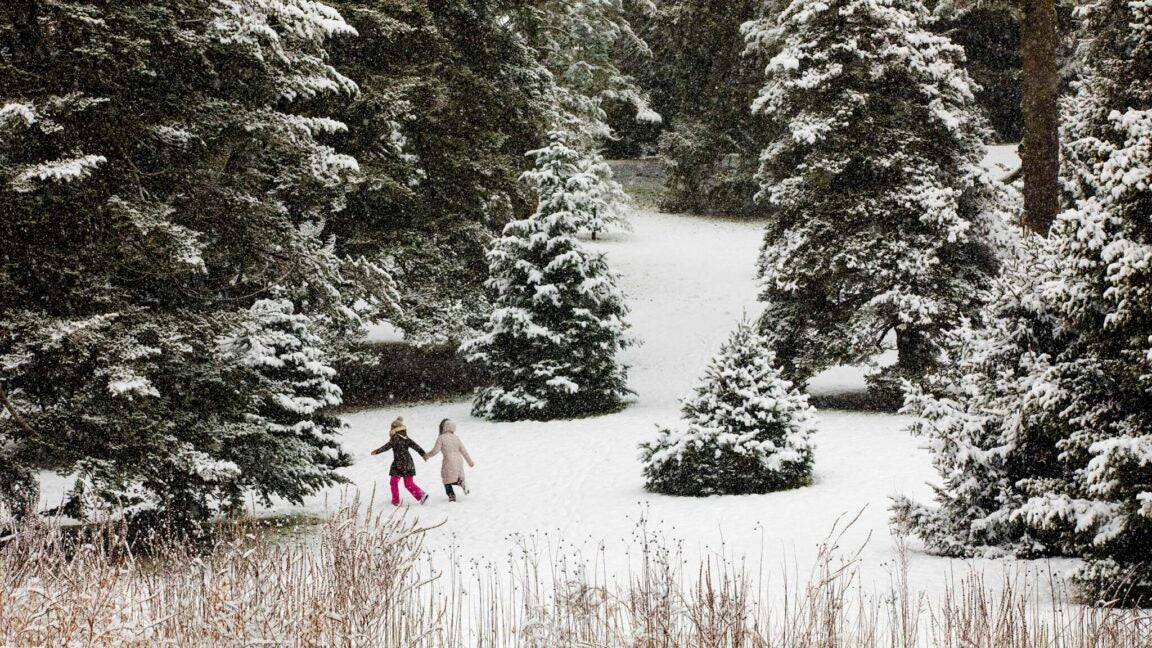 Two kids running in the snow toward some evergreen trees