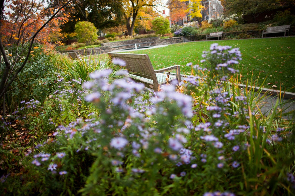 A bench surrounded by green grass and flowers.