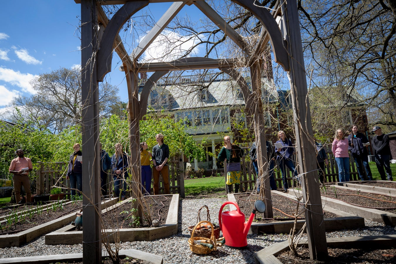 Group of students gather around a community garden on Harvard's campus