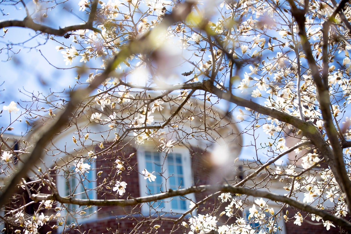 Brick building seen through blossoming trees.