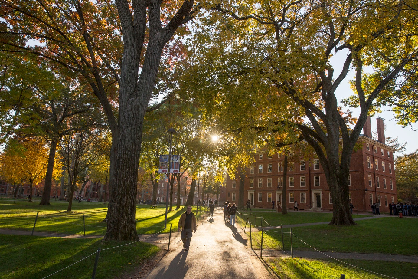 Campus with sun streaming through trees and person walking.