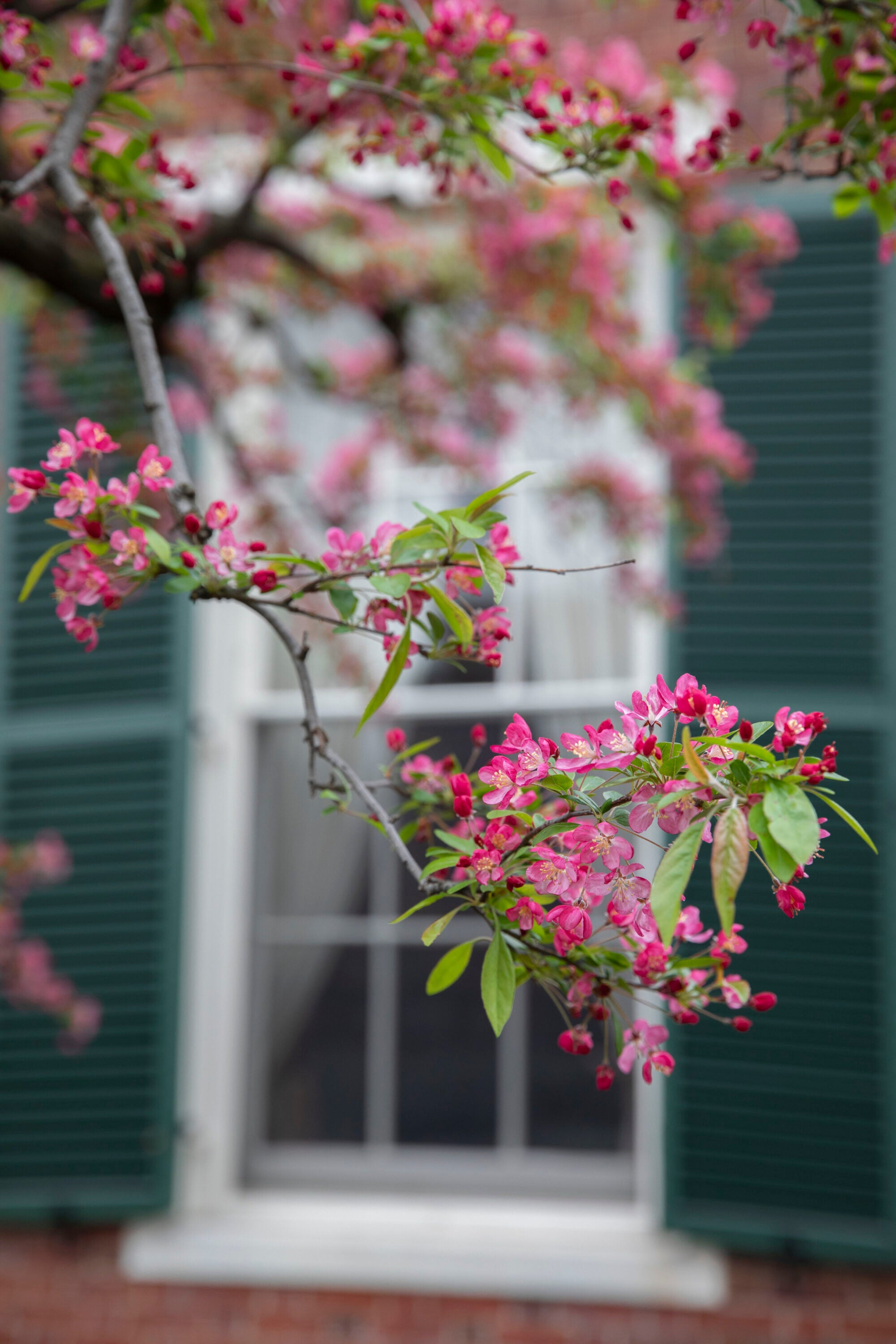 Red flowers and green leaves on a branch in front of a window