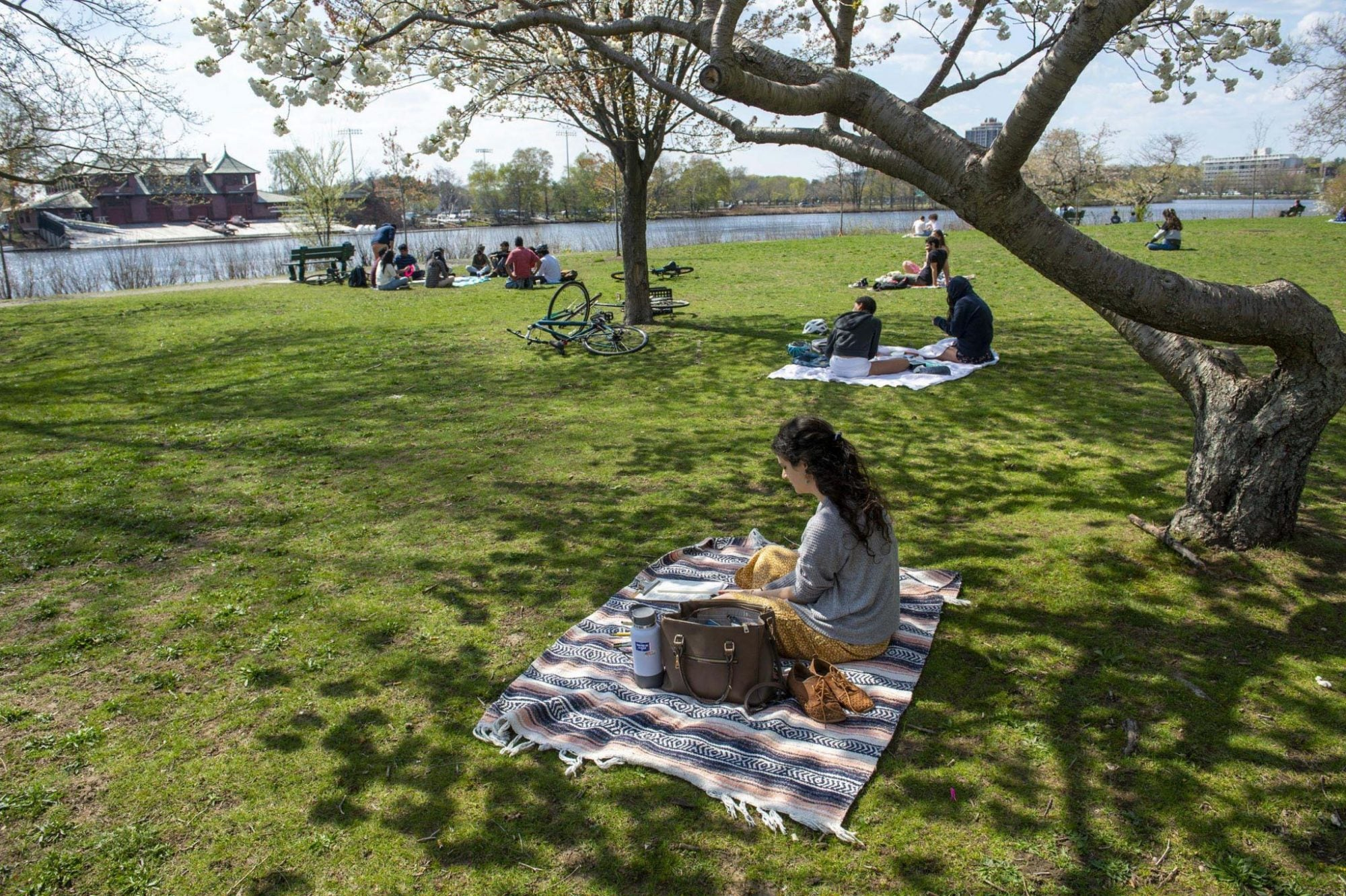People picnicking next to the Charles river