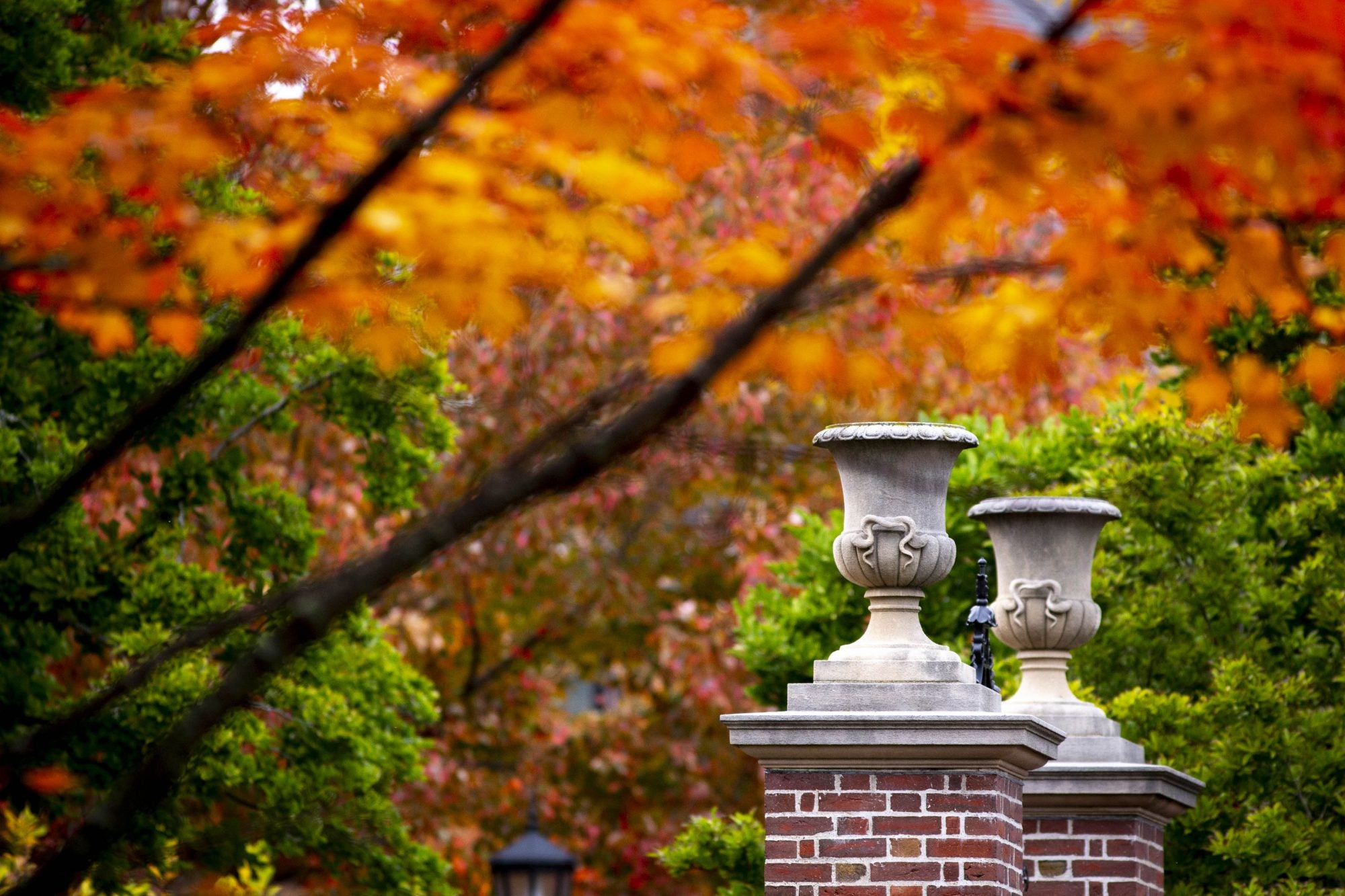 Orange leaves seen over two brick columns