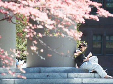 A student reads on steps by a pillar with a pink flowering tree in the forefront