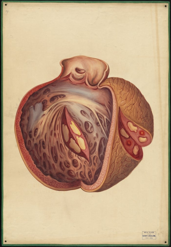 A watercolor of a heart