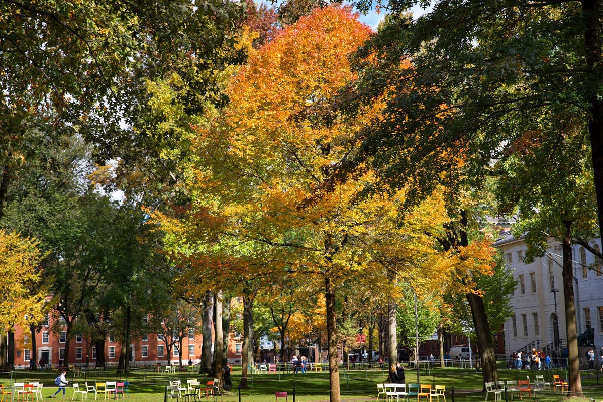 Students gather in Harvard Yard surrounded by fall foliage